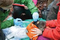 A day in the life of a bear researcher